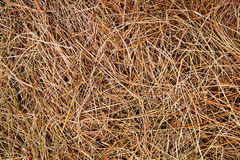 Dry straw background Royalty Free Stock Image