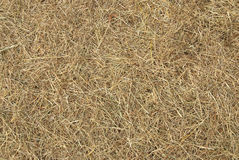 Dry straw background Stock Photos