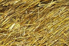Dry straw background Royalty Free Stock Photos