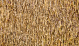 Dry straw. Stock Photo