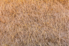 Dry straw background Stock Images