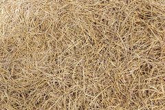 Dry straw. background or texture stock photography