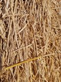 Dry straw background and texture. A dry straw background and texture in thailand royalty free stock image