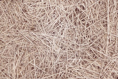 Dry straw Background or Texture Stock Image