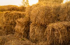 Dry straw bale. Pile of stacked yellow straw bales. Haystack in farm. Animal fodder. Agricultural byproduct. Food and bedding for