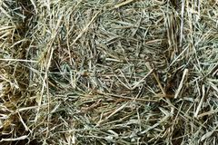 Dry straw closeup texture. Farming background. Dry gray straw closeup. Farming harvest background. Abstract natural thatch pattern royalty free stock photo