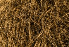 Dry straw grass background texture. After havest royalty free stock photos
