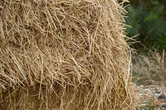 Dry straw Royalty Free Stock Image