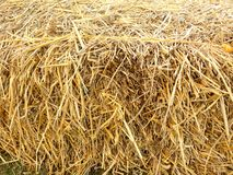 Dry straw or hay Stock Photo