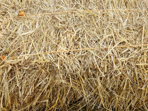 Dry straw, hay, stack texture Stock Photography