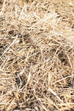 Dry straw haystack Stock Photography