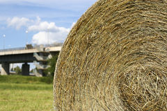 Dry straw on the lawn Royalty Free Stock Image