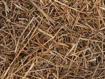 Dry straw Royalty Free Stock Photos