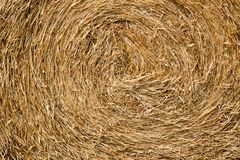 Dry straw macro shot Royalty Free Stock Photography
