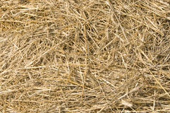 Dry straw Stock Photography