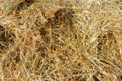 Dry straw macro shot. Background or Texture. Cluster straw, truss straw - abstract background stock photos