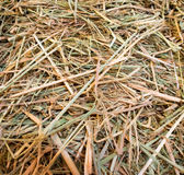 Dry straw macro shot Background or Texture Royalty Free Stock Image