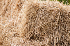 Dry straw Stock Photos