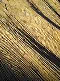 Dry straw reed texture shadows Royalty Free Stock Photos