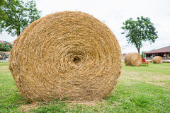Dry straw roll Stock Photo