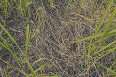 Dry straw scattered with grass texture Stock Photos