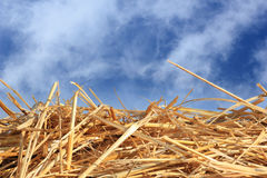Dry straw texture. And blue sky, useful for backgrounds stock photos