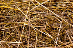 Dry straw texture Stock Photo