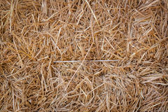 Dry straw texture Stock Images