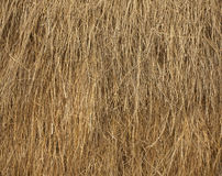Dry straw Royalty Free Stock Photo