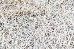 Dry Straw Texture Stock Photos