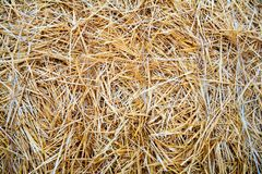 Dry straw texture background. Vintage style for design rural style royalty free stock photo