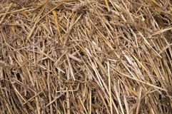 Dry straw texture background. Dry straw rural texture background stock images