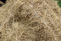 Dry straw texture background, vintage style for design.  stock image