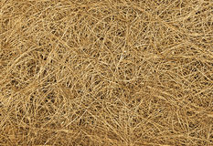 Dry straw texture, backround. Dry straw texture or backround, nature, plants royalty free stock images
