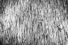 Dry straw texture black and white Stock Photos