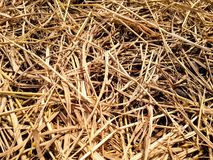 Dry straw texture Stock Photography