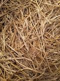 Dry straw texture Stock Image