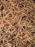 Dry straw texture Stock Photo