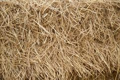 Dry straw texture Stock Photos
