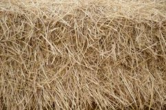 Dry straw texture Royalty Free Stock Images