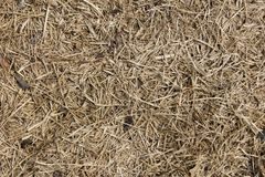 Dry straw texture. Dirty straw background stock photos