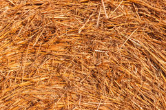 Dry straw texture. Dry straw hay as a texture stock image