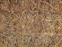 Dry straw texture Royalty Free Stock Image