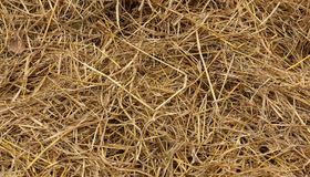 Dry straw texture. Use for Agriculture royalty free stock image