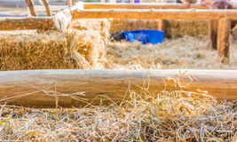 Dry straw and  wooden fence in farm Stock Images