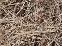 Dry straw yellow brown nest. A photograph of dry straw as part of a nest. It is yellow in color and will make a good background picture stock image