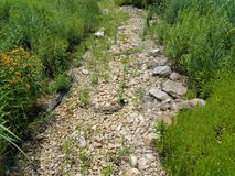 Dry stream bed with rocks and plants. And flowers growing Stock Images