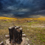 Dry stump in a badlands Royalty Free Stock Photography