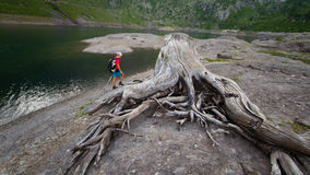 Dry stump In the shores of a mountain lake in the background a w Royalty Free Stock Photos