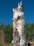 Dry stump Stock Photography